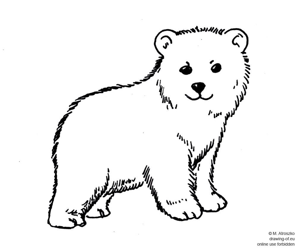 little polar bear drawing