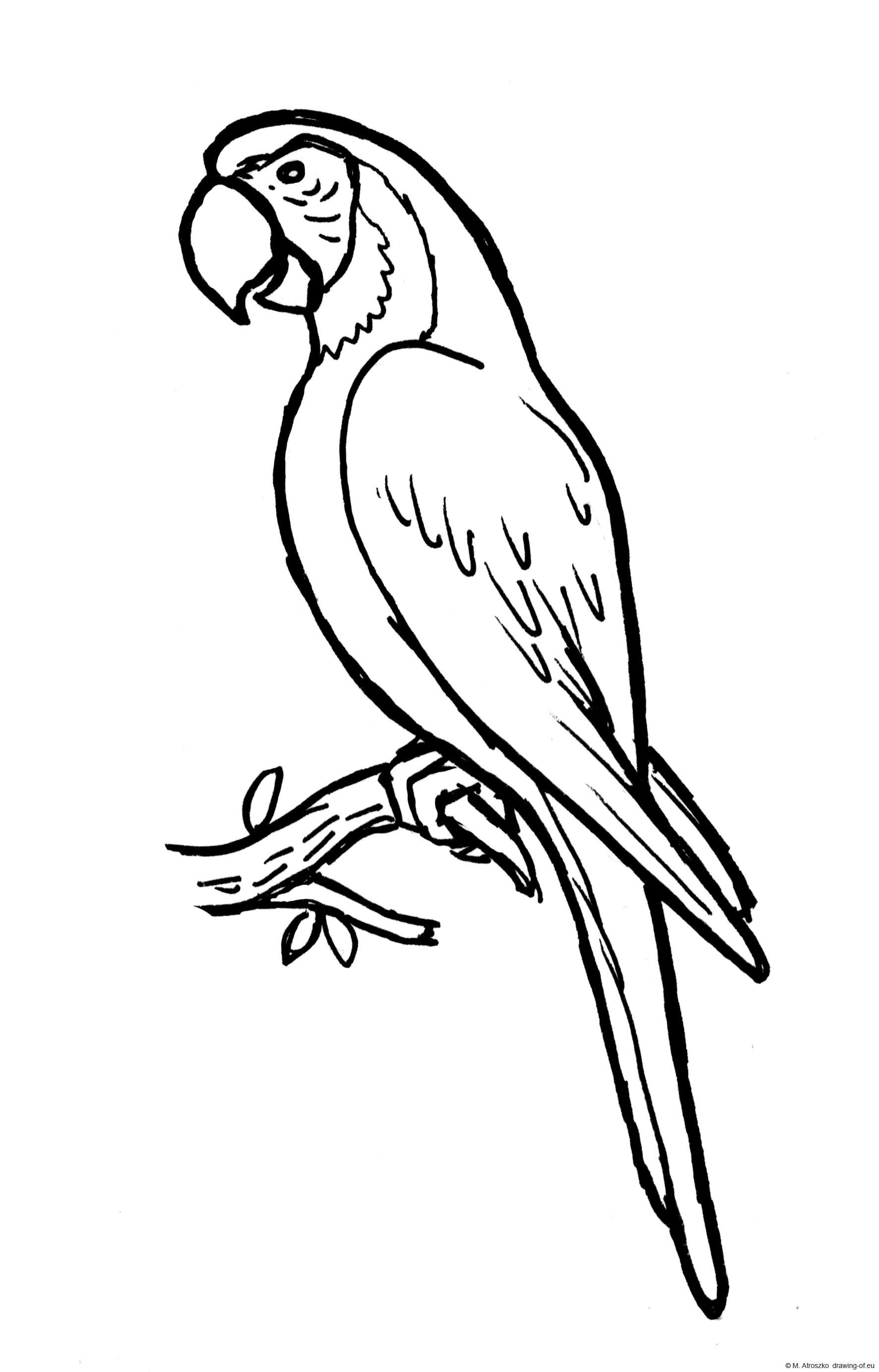 Drawing of ara ararauna parrot