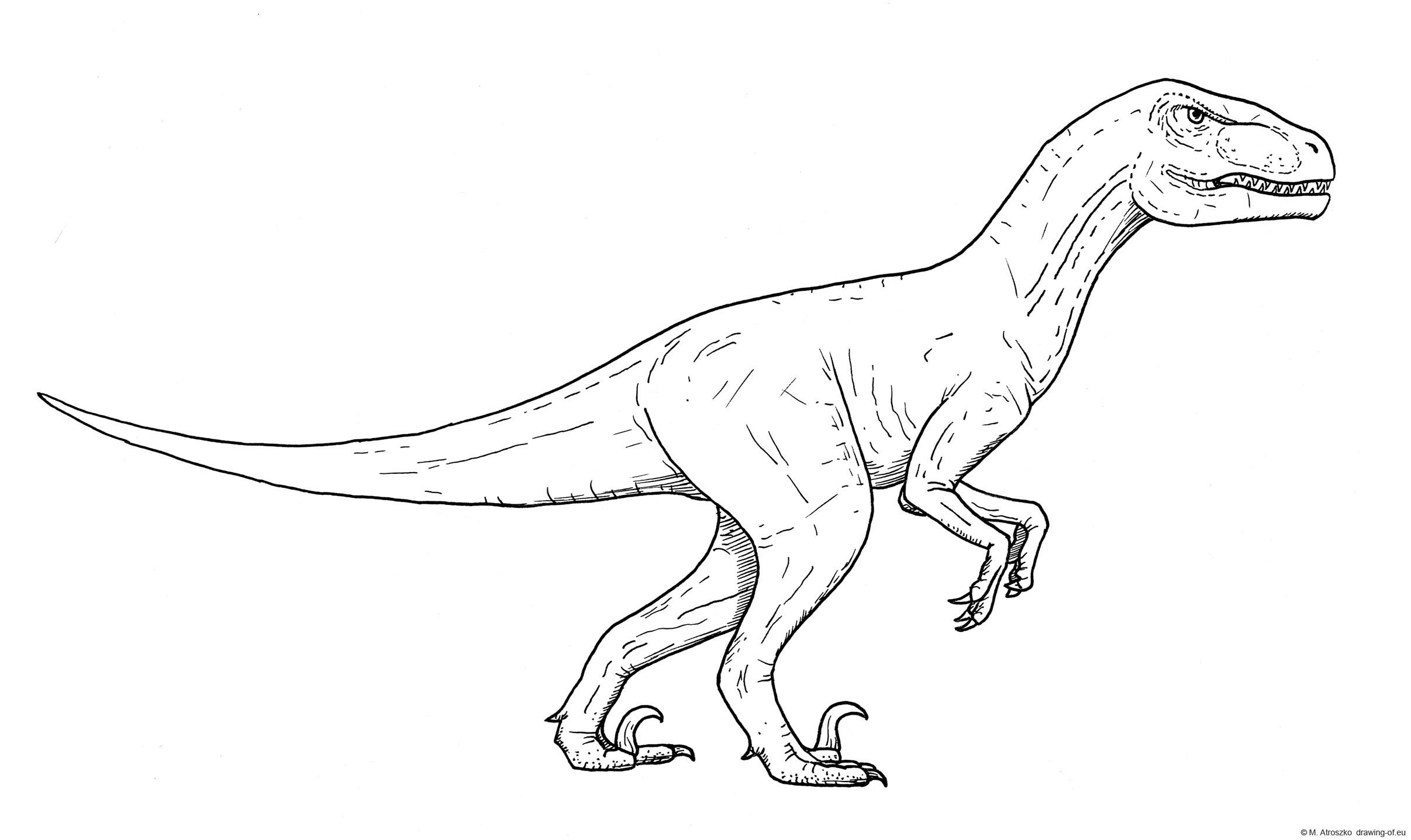 Velociraptor draw