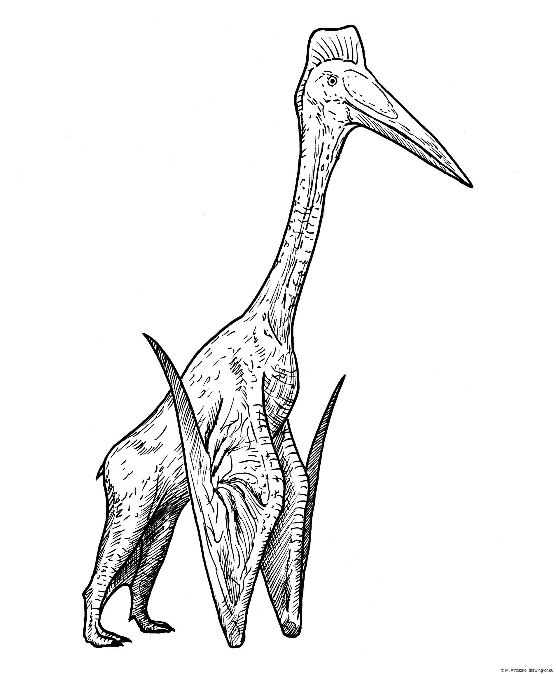 hatzegopteryx draw