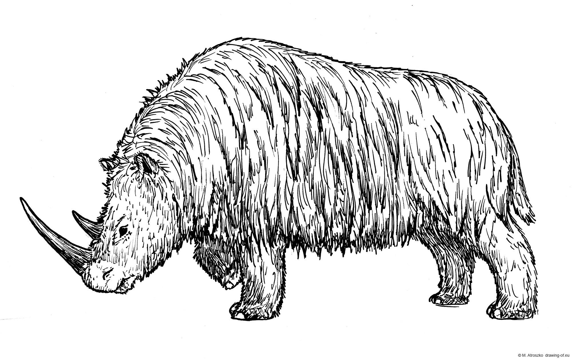 Woolly rhinoceros drawing
