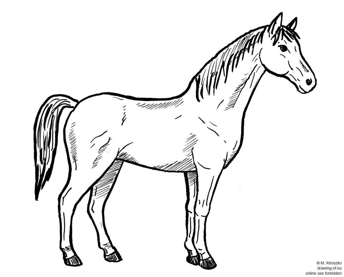 Drawing Of Horse Drawing Of Eu