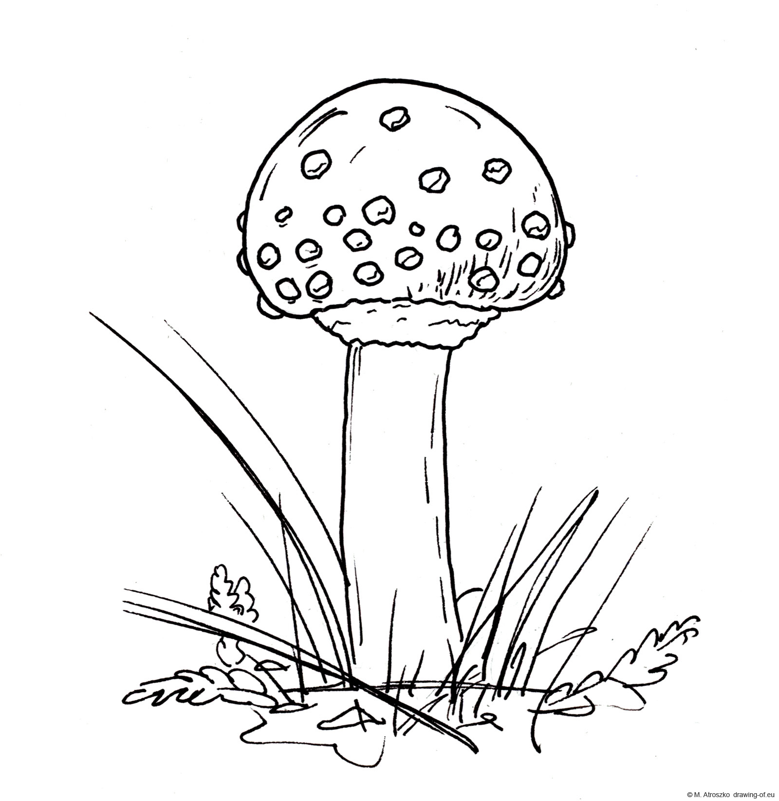 Drawing of fly agaric