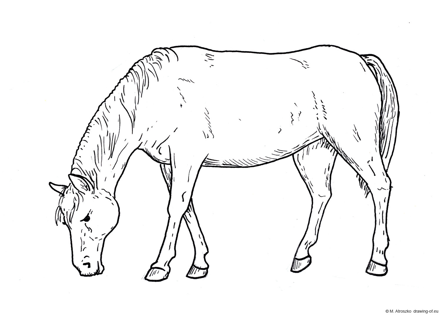 drawing of eating horse