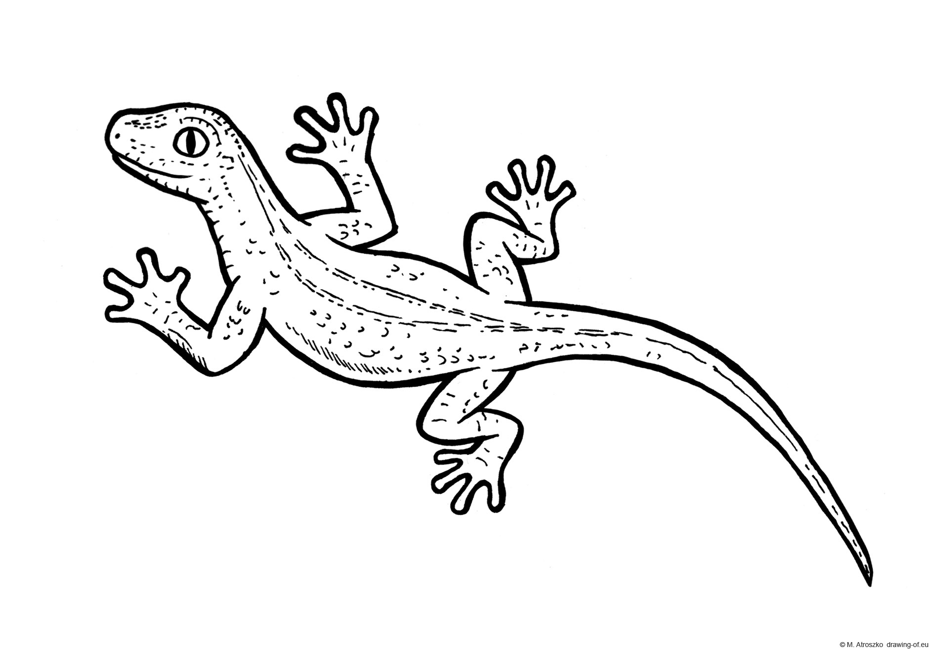 Drawing of lizzard