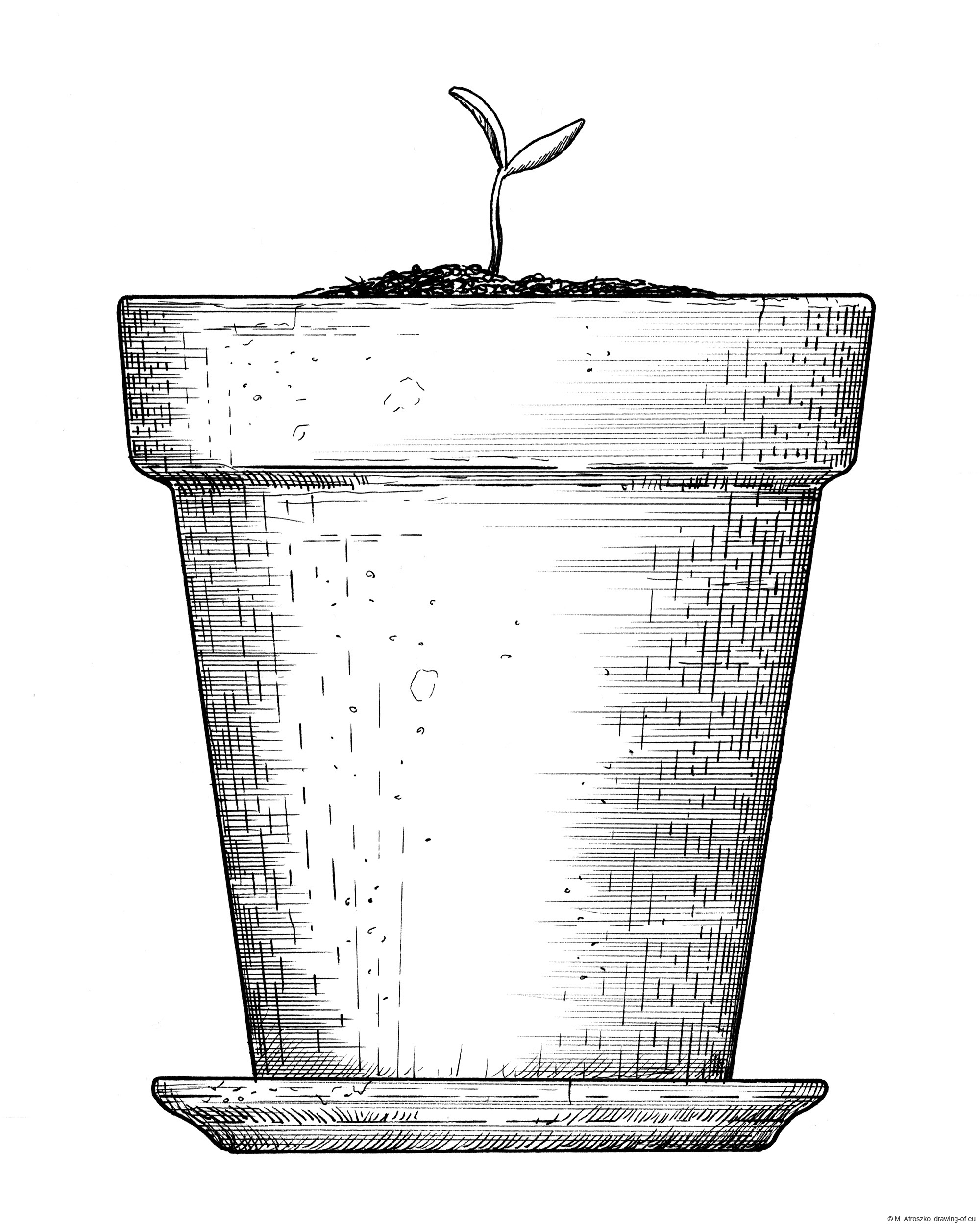 Drawing of plant in pot - sketch